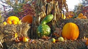 Raccolto di caduta alla contea di Orange Arborium Immagini Stock Libere da Diritti
