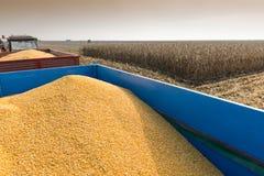Raccolto di cereale fotografia stock