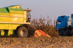 Raccolto di cereale in autunno Immagini Stock