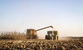 Raccolto di cereale di caduta Immagini Stock