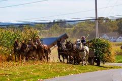 Raccolto di cereale dagli agricoltori di Amish Fotografia Stock Libera da Diritti