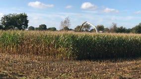Raccolto di cereale, raccoglitrice di foraggio del cereale nell'azione, camion del raccolto con il trattore stock footage