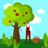 Raccolto di Character Pick Apple dell'agricoltore dell'uomo al canestro illustrazione di stock