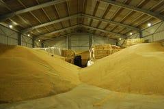 Raccolto di grano fotografia stock