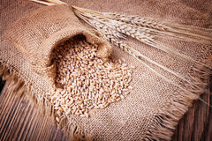 Raccolto di grano e delle orecchie Fotografia Stock