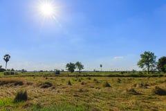 Raccolto di grano in un giorno soleggiato Fotografia Stock