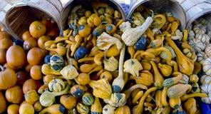 raccolto di verdure Immagini Stock Libere da Diritti