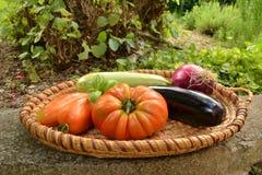raccolto di verdure Immagine Stock
