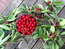 Raccolto di vetro dolce della ciliegia in Bassa Sassonia fotografie stock