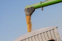 Raccolto e caricamento combinati della soia nel camion del grano Fotografia Stock Libera da Diritti