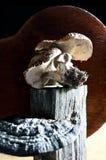 Raccolto e foraggiamento del fungo Immagini Stock Libere da Diritti