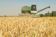 Raccolto foraggero nel grano di falciatura del campo immagine stock