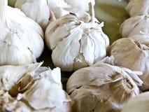 Raccolto fresco dei chiodi di garofano di aglio Fotografie Stock