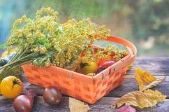 Raccolto fresco dei pomodori rossi e gialli in un canestro di vimini su una vecchia tavola di legno Fotografia Stock Libera da Diritti