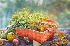 Raccolto fresco dei pomodori rossi e gialli in un canestro di vimini su una vecchia tavola di legno Fotografie Stock Libere da Diritti