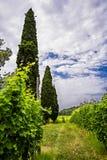 Raccolto in Italia Immagini Stock