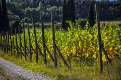Raccolto in Italia Fotografie Stock