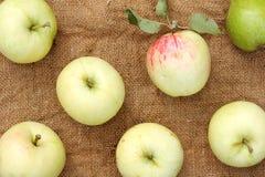 Raccolto maturo delle mele e delle pere Immagini Stock