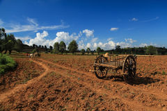 Raccolto nel Myanmar & x28; Burma& x29; fotografia stock libera da diritti
