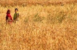 Raccolto nel Nepal Immagini Stock