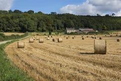 Raccolto North Yorkshire - Inghilterra del tempo Fotografia Stock