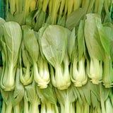 Raccolto organico di pakchoi della lattuga in azienda agricola Immagine Stock Libera da Diritti