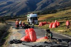 Raccolto rosso sulla strada, altopiani andini Perù della quinoa Fotografia Stock
