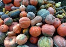 Raccolto selezionato della zucca di autunno Immagini Stock Libere da Diritti