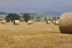 Raccolto in Slovacchia Fotografie Stock Libere da Diritti