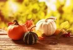 Raccolto variopinto di autunno Immagine Stock