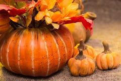 Raccolto, zucche e funghi di autunno di natura morta Fotografie Stock