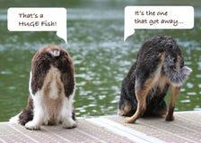 Racconto del pesce di due cani Fotografia Stock Libera da Diritti