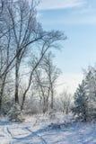 Racconto del ` s di inverno Fotografie Stock