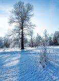 Racconto del ` s di inverno fotografia stock libera da diritti