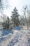 Racconto del ` s di inverno fotografia stock
