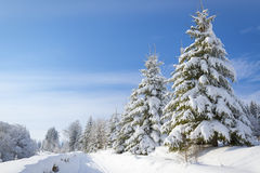 Racconto dell'inverno Immagini Stock Libere da Diritti