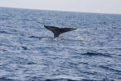 Racconto della balena Immagine Stock