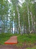 Racconto della foresta Fotografia Stock