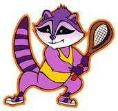 raccoon Obrazy Stock