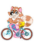 Raccoon. The animated cheerful raccoon goes on a bicycle Stock Photos