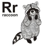 Raccoon with abc. Funny raccoon stand with his name and letters r Royalty Free Stock Images