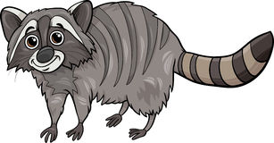 Raccoon animal cartoon illustration Royalty Free Stock Photography