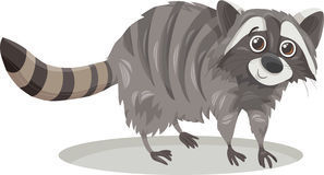 Raccoon animal cartoon illustration Stock Images