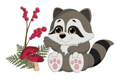 Raccoon Baby Stock Images