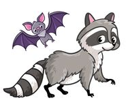 Raccoon and bat on a white background. Royalty Free Stock Photos