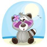 Raccoon on the beach Stock Image