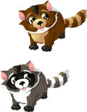 Raccoon. Beautiful raccoon in two colours on a white background vector illustration