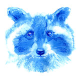 raccoon Bild för löst djur Arkivbilder