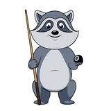 Raccoon billiards player with ball and cue Stock Photo