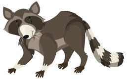 Raccoon with black and white fur. Illustration Royalty Free Stock Photos